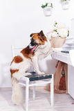 Dog and piano. Royalty Free Stock Images