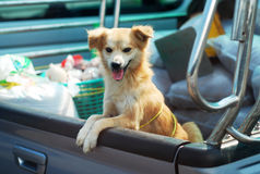 Dog Pickup Stand Truck Royalty Free Stock Photo