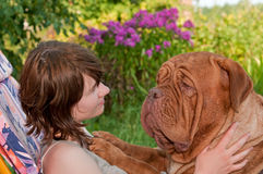 Dog Picnicing stock photo