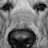dog picture in the foreground royalty free stock images