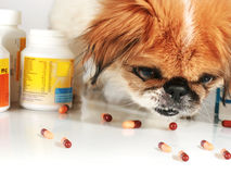 Dog and pills. Stock Images