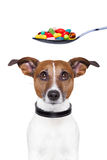 Dog pills diet. Dog scared of a spoon full of pills Stock Photography