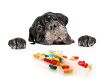 Dog and pills. Dog and pills isolated over white royalty free stock images