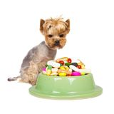 Dog with pills. Photo of Yorkshire dog sitting next to the cup full of medicaments, concept of illness Stock Images