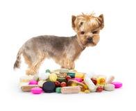 Dog with pills stock photos