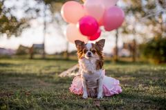 Dog in pink royalty free stock photography
