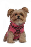 Dog in Pink Coat Stock Photos