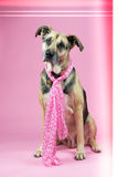Dog with pink Royalty Free Stock Photos