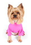 Dog in pink overalls Royalty Free Stock Image