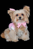Dog in Pink Pastel Dress Stock Image