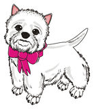 Dog with pink ribbon Stock Image