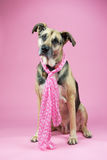 Dog with pink Royalty Free Stock Images