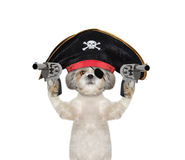 Dog in a pirate costume with guns Royalty Free Stock Photography
