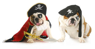 Dog pirates Royalty Free Stock Photo