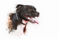 Dog Pit bull Terrier. Painting of Dog Pit bull Terrier Royalty Free Stock Image