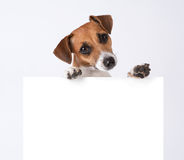 Dog with placard Stock Image