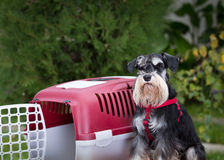 Dog beside plastic carrier Stock Photos