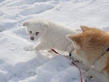 dog play Стоковые Изображения