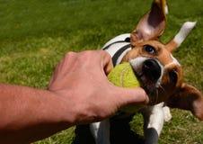 dog play Стоковые Фото