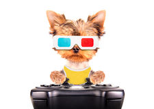 Dog play on game pad Stock Photos