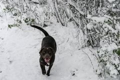 Dog play in snow in a heavy snowy day. Dog play in the park in a heacy snowfall Royalty Free Stock Image