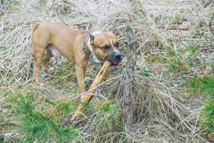Dog play with tree. 2017 royalty free stock photo
