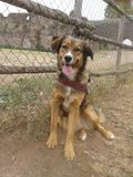 Dog at playground Stock Image