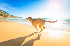 Dog Playing At The Beach Royalty Free Stock Photos