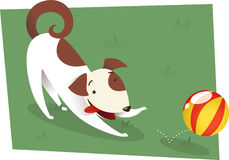 Dog playing with ball. Dog playing to catch red and yellow ball. Brown and white dog playing on the grass or a formal garden with a ball  illustration Royalty Free Stock Photos