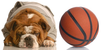 Dog playing basketball Royalty Free Stock Photos
