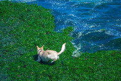 Dog playing in the beach. High angle view a dog playing the beach Royalty Free Stock Photo