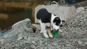 Dog playing with a bottle on the shore of Lake stock footage