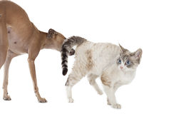 Dog playing with a cat stock photography
