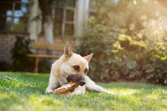 Dog playing Stock Photos