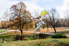 Dog playing with flying disk at empty autumn park. Jack Russell Terrier catching yellow frisbee Royalty Free Stock Images