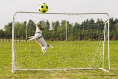 Football soccer ball hits crossbar while funny keeper jumping to save goal Royalty Free Stock Image
