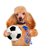 Dog playing football Royalty Free Stock Photo