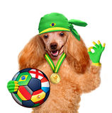 Dog playing football Royalty Free Stock Photos