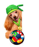 Dog playing football Stock Images