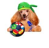 Dog playing football Royalty Free Stock Image
