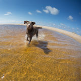 Dog playing at French beach Royalty Free Stock Photography