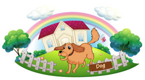 A dog playing in front of a house Stock Images
