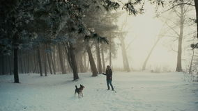 Dog playing with girl stock footage