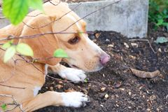 A dog is playing on the ground. He is enjoy digging the ground hole stock photo