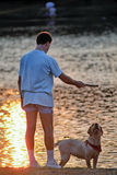 Dog playing with his man. Man and labrador playing fetch on a summer eve royalty free stock image