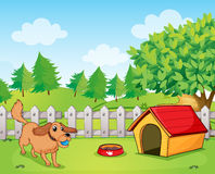 A dog playing inside the fence Stock Images
