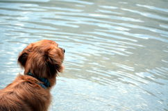 Dog playing in the lake Stock Photos