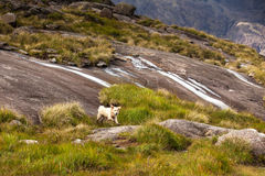 Dog playing between mountains Stock Photography
