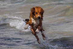 Dog playing in the Ocean Stock Photo