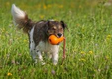 Dog playing Stock Image